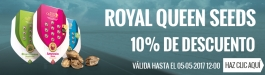 Oferta Royal Queen Seeds